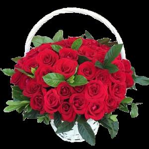 Сагстай цэцэг 33ш